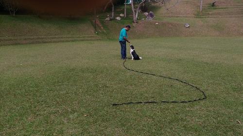 adiestramiento canino en el valle de aburra
