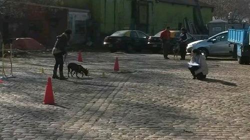 adiestramiento canino en positivo