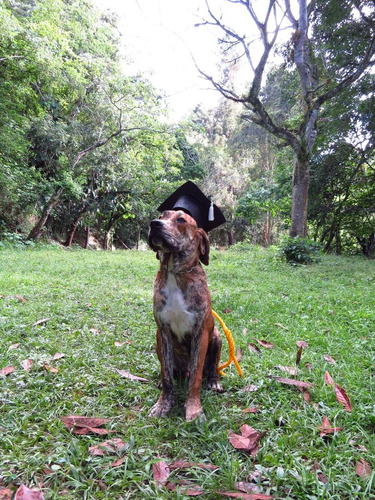 adiestramiento canino, entrena tu perro -  escuela de perros