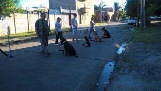 adiestramiento canino  escuela de canes  mar del plata