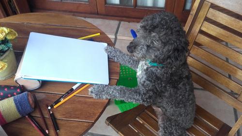 adiestramiento canino (modalidad a domicilio u online)