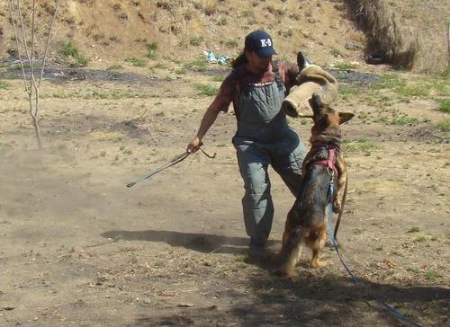 adiestramiento canino para