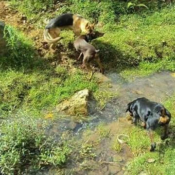 adiestramiento canino para todas las razas