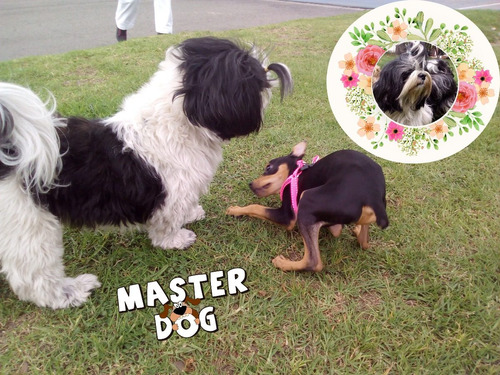 adiestramiento canino personalizado a domicilio