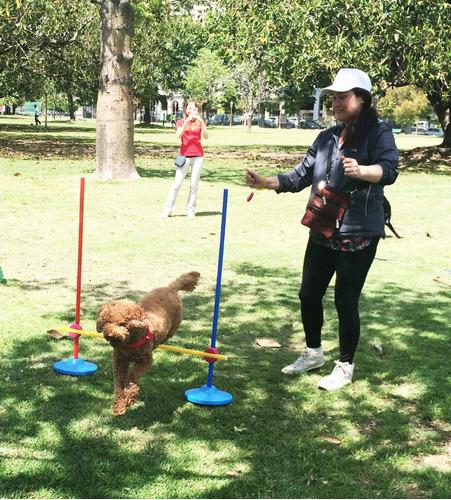 adiestramiento canino profesional con metodos positivos
