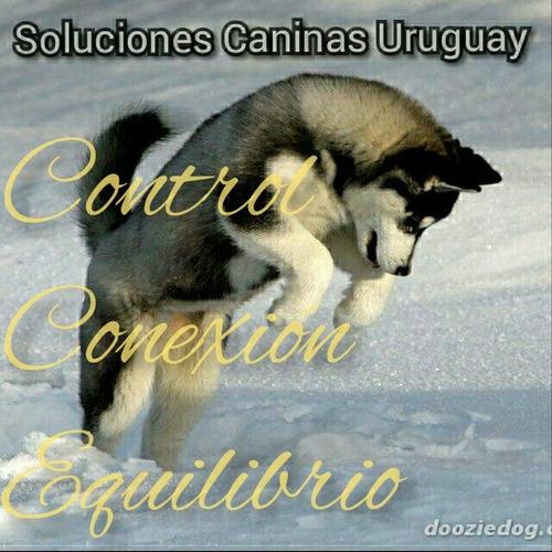 adiestramiento canino. rehabilitacion. problemas de conducta