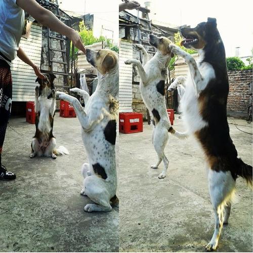 adiestramiento canino uma