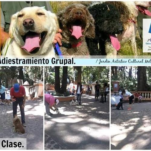 adiestramiento canino y asesoría conductual