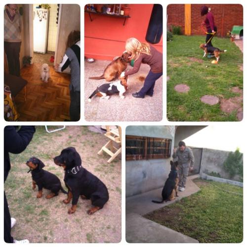 adiestramiento canino. zona oeste