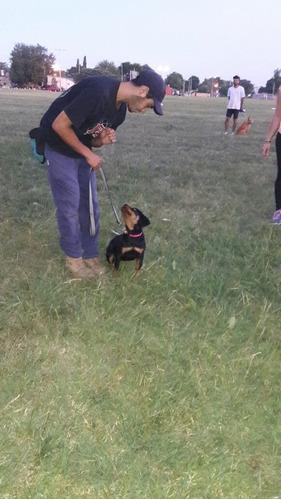 adiestramiento canino zona oeste