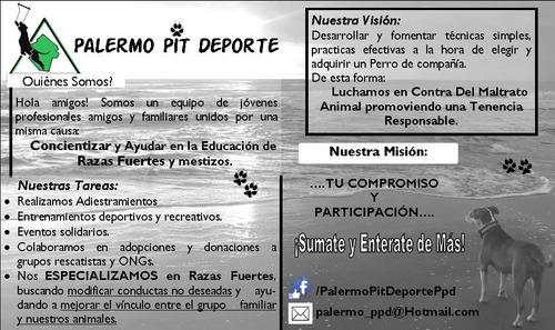 adiestramiento / entrenamiento deportivo - recreativo canino