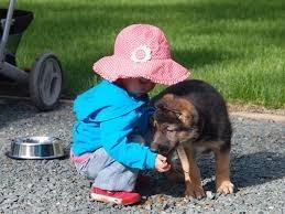 adiestramiento y educacion canina zona sur gba y caba