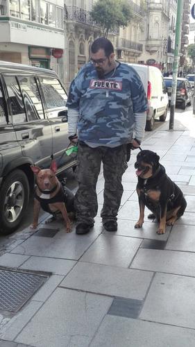 adiestramiento y entrenamiento canino profesional