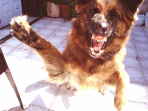 adiestramiento y pensionado canino