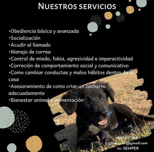 adiestramiento y rehabilitación canina y felina