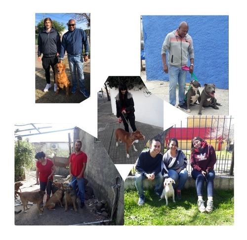 adiestramiento y rehabilitaciones caninas