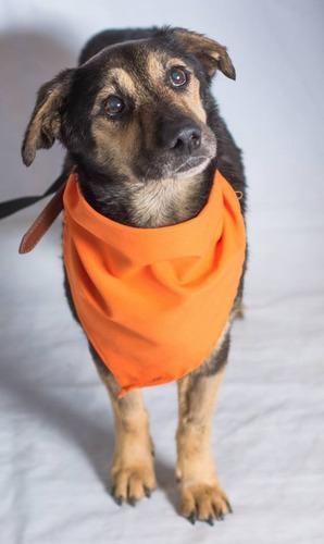 adoptame! pequeño y cariñoso perrito parecido a lipigas busc