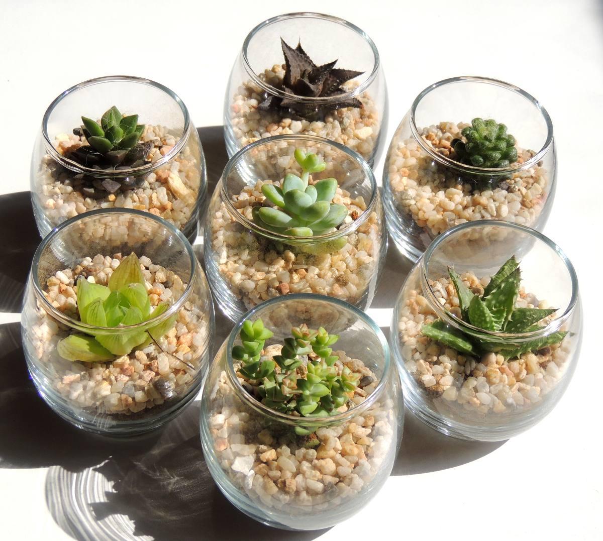 Adorno para casa hogar cactus miniatura suculentas for Adornos hogar