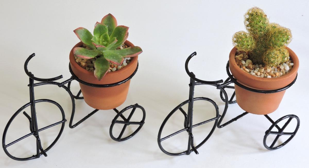 adorno para casa triciclo con planta echeveria