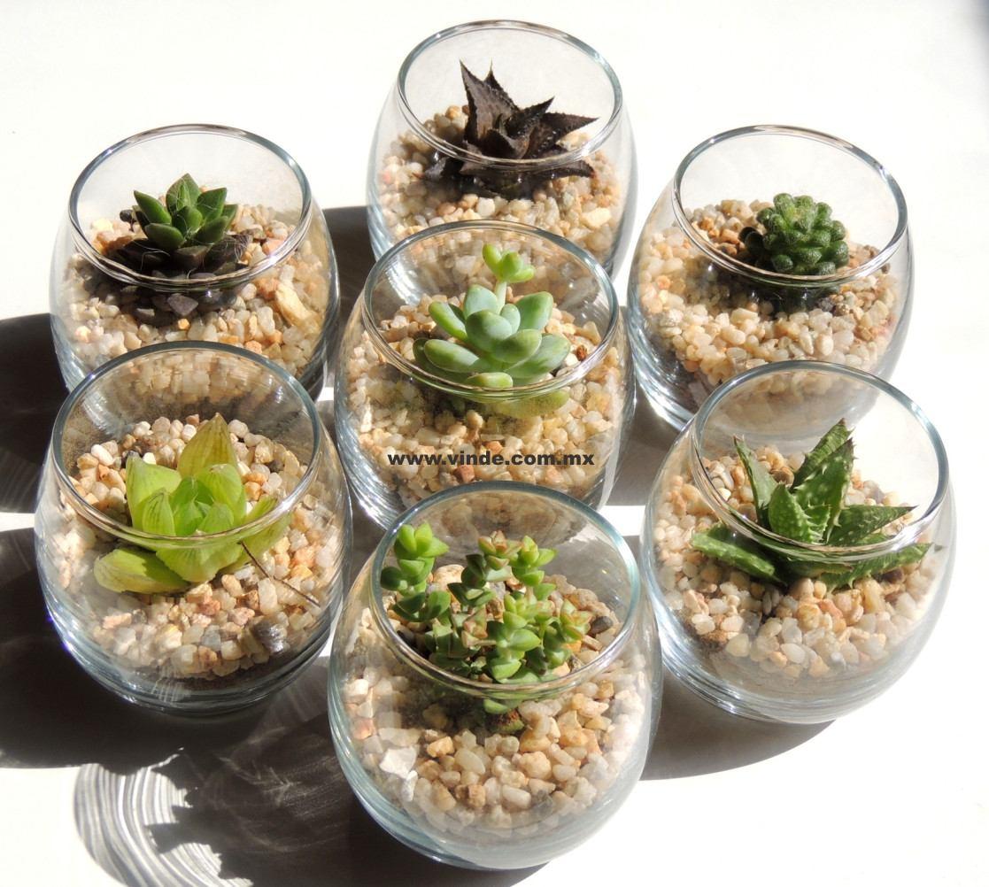 Adorno para cocina plantas f ciles de cuidar suculentas - Plantas de exterior faciles de cuidar ...