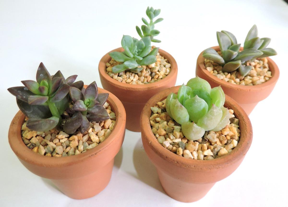 adorno para tu casa plantas f ciles de cuidar suculentas