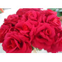 Rosas Artificiales Rojas