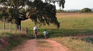 adquira a sua casa de campo próximo são lourenço da serra002