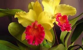 adubo peters profissional fertilizante orquídea 202020  1kg