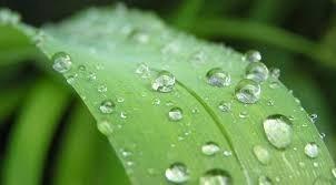 adubo peters profissional fertilizante orquídea 202020= 20g