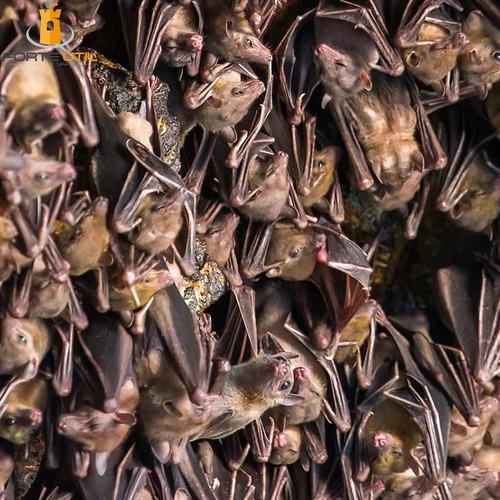 afasta espanta repele morcego não mata não é veneno - 400ml