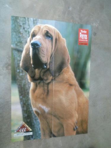 afiches de varias razas caninas