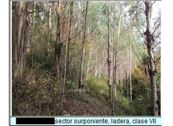 agricola - forestal  antilhue