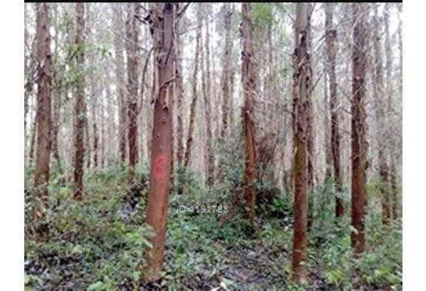 agricola forestal - reumen
