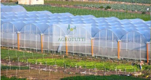 agrolene  plástico invernadero 4mts ancho x 10 mts largo