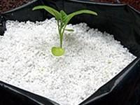 agrolita perlita 1kg, germinación,  sustrato, hidroponia