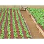Hidroponia - Cultivo Sin Tierra