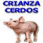 Proyecto Ganado Porcino; Cerdos, Cochino Sirve Para Credito