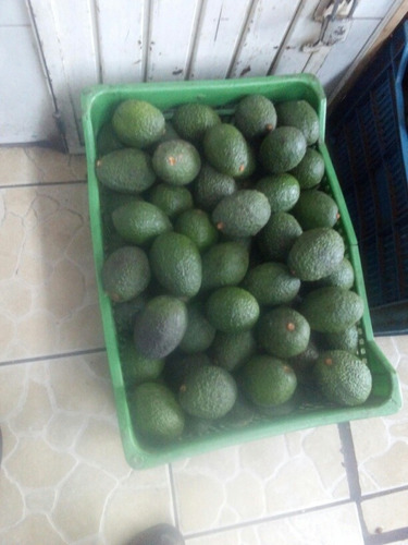 aguacate hass