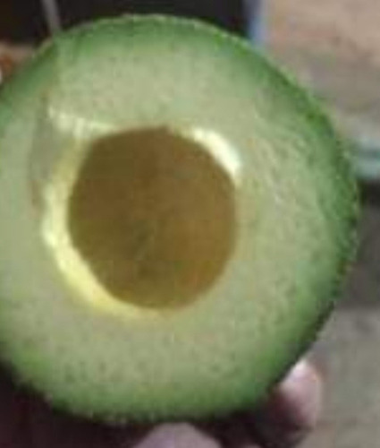 aguacate hass michoacán