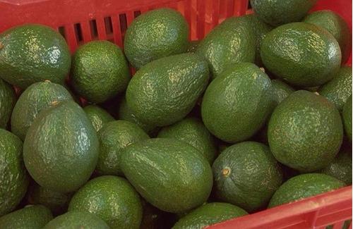 aguacates  avocados frutas verduras  caja de 20 kilos