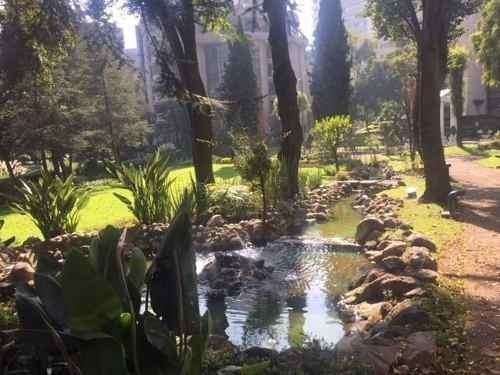 ahuehuetes nte trianon - bosques de las lomas
