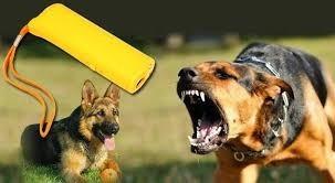 ahuyentador perros y educador envio a todo el pais