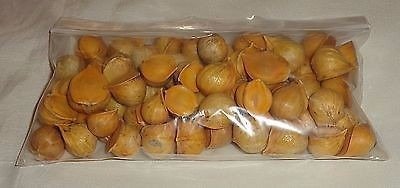 Ajo Japones Ajo Chino 250 Gr Japanese Garlic Semilla 18500 En
