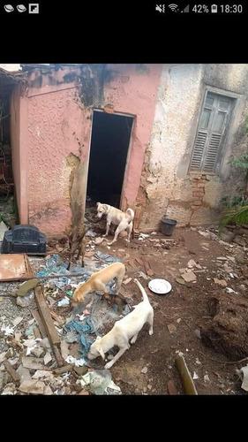 ajuda aos cães abandonados