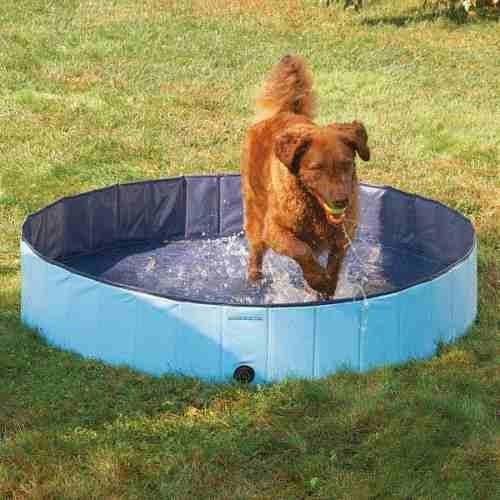 Alberca o piscina guardian gear para perro grande for Piscinas para perros grandes