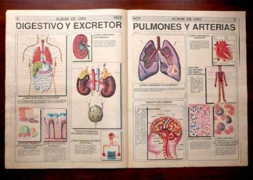 Album De Oro Atlas De Anatomía Hoy Antiguo Embarazo Músculos - S/ 15 ...