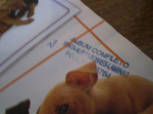 album  the dog   panini (r620