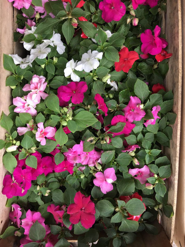 alegría de hogar ~ hermosas ~ todas con flores !!!! m12