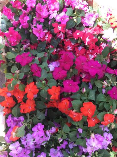alegría hogar con flores