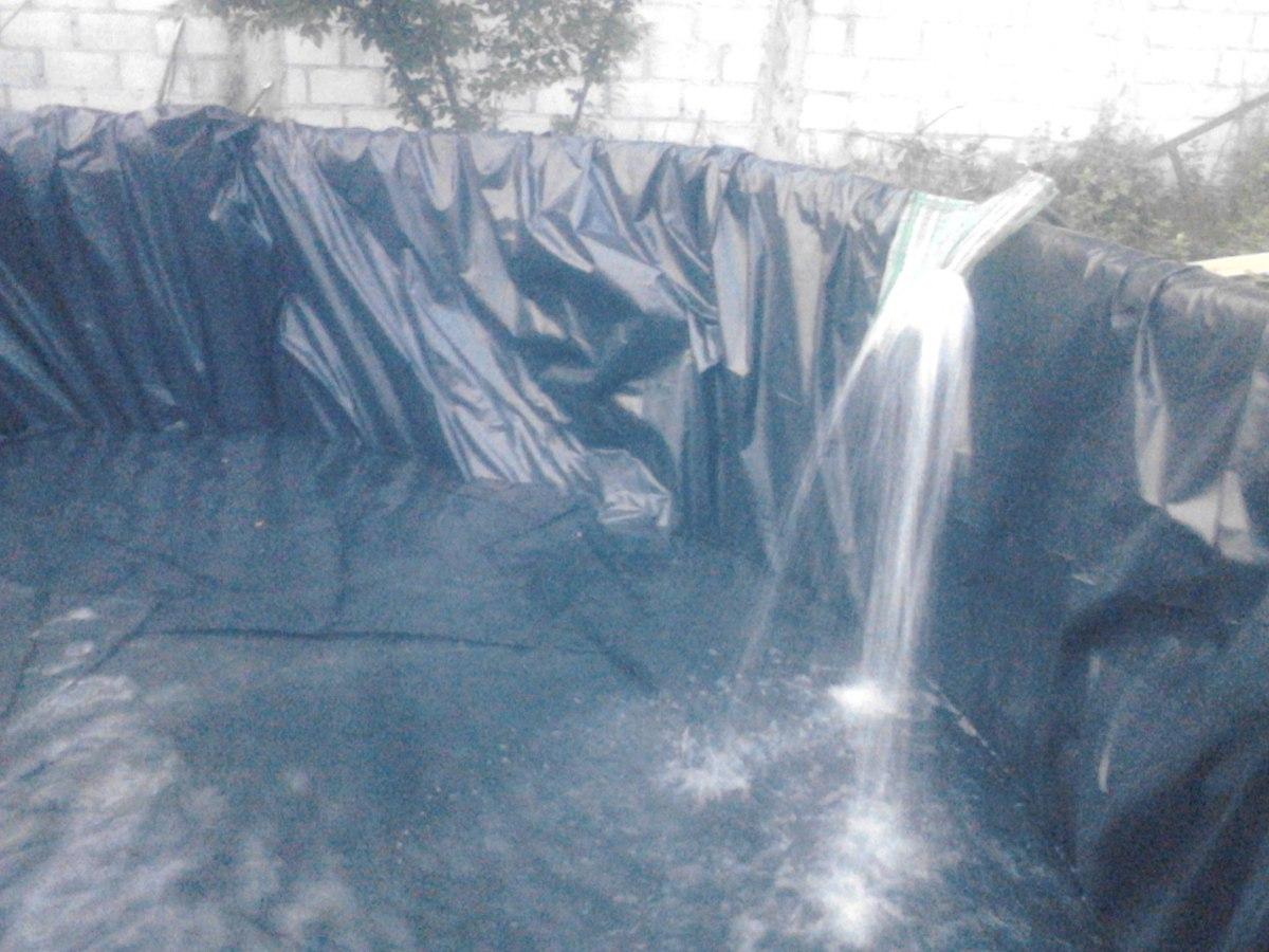 Alevines de mojarra tilapia para estanque en for Como hacer un estanque para criadero de tilapia